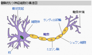 ml_w4_neuron